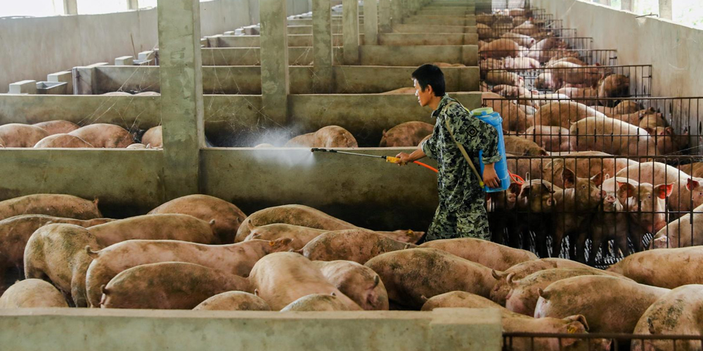China tightens control on live pig movements to tackle ASF