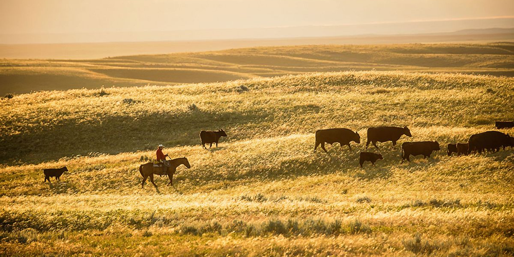 Cargill in partnership to help US cattle ranchers tackle impacts of climate change